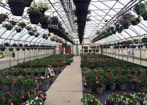 Annual Volunteers in Corrections Flower Sale