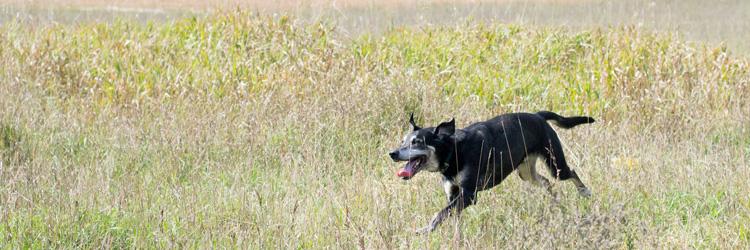 Rice Creek Off-Leash Dog Area