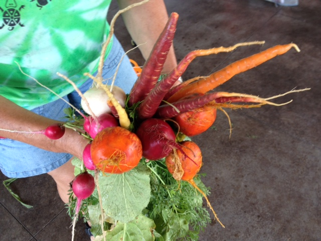 A variety of root vegetables harvested from the Tamarack Nature Center garden.