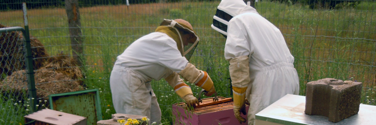 Volunteer beekeepers at Tamarack Nature Center
