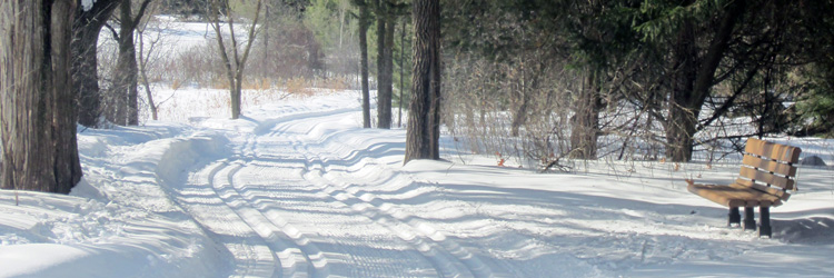 Cross-country ski trail at Tamarack Nature Center