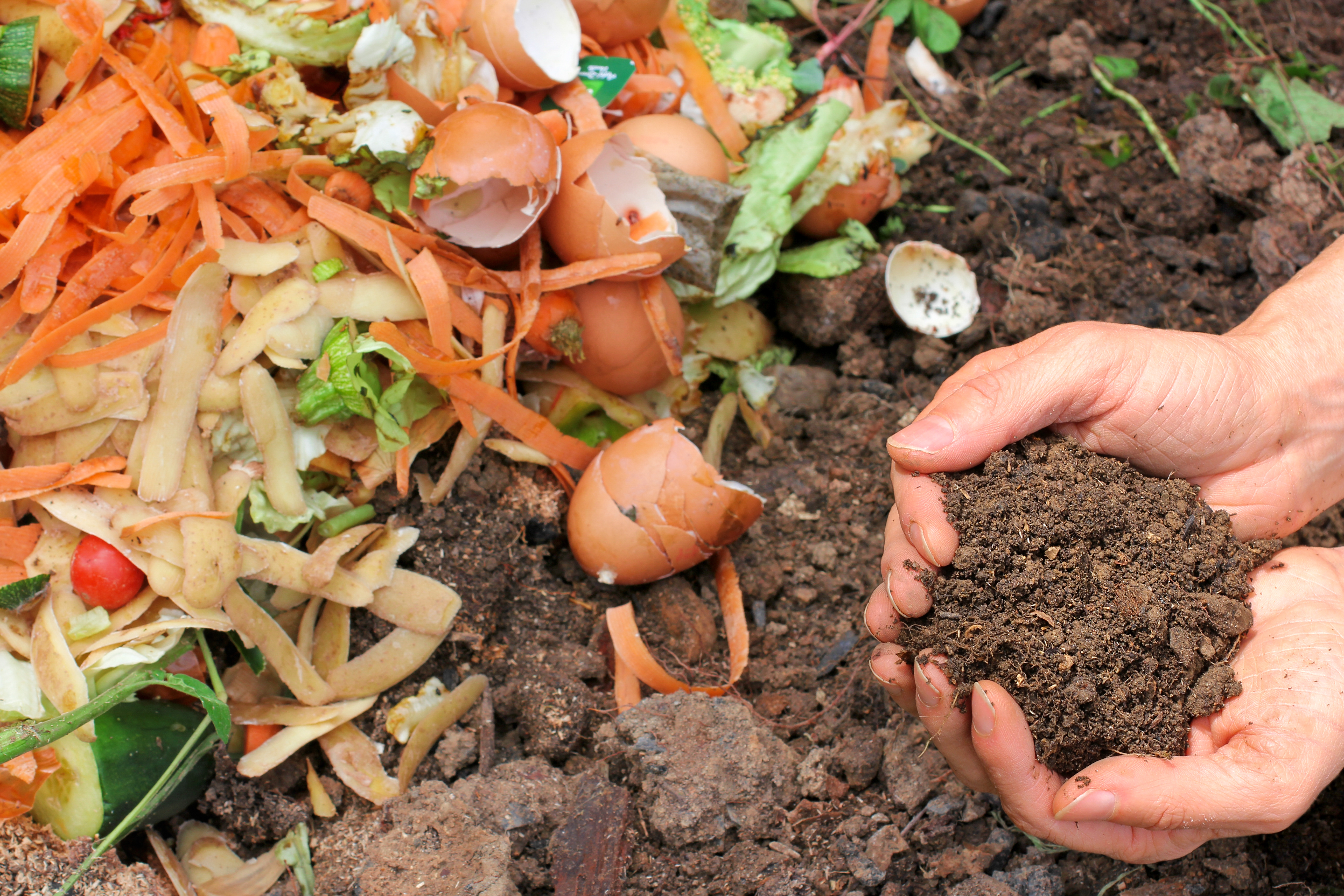 Food scraps, compost and soil