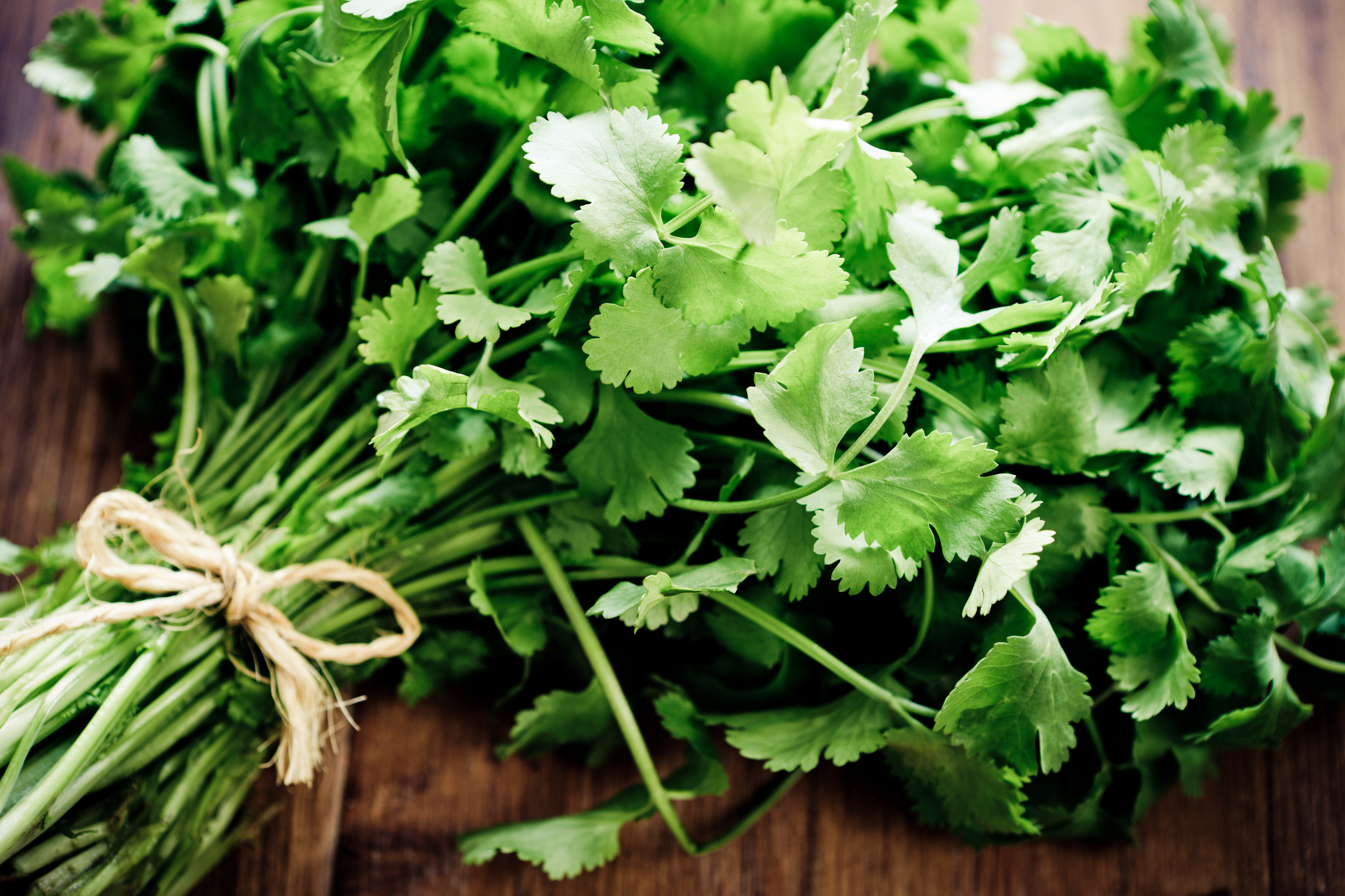 Storing and using fresh herbs