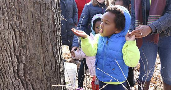 Child reaching to taste syrup from a tree tap at a Tamarack Nature Center event