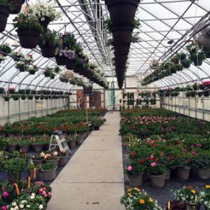 Annual Volunteers in Corrections Flower Sale