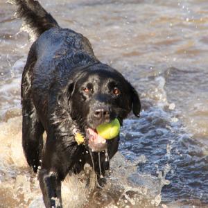 Dog at Battle Creek Regional Park